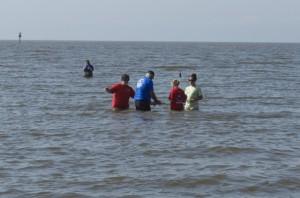 Sea turtle release04