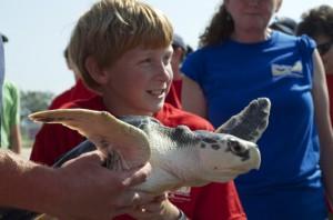 Sea turtle release05