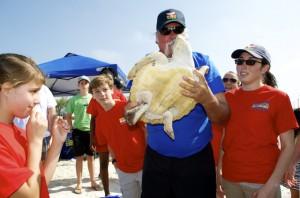 Sea turtle release07