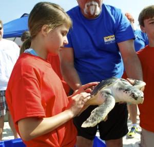 Sea turtle release08